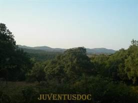 Juventus OFC Alex Del Piero – boschi Sardegna